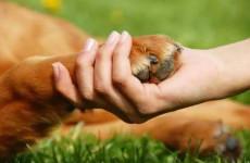Nálatok számítanak az állatok?