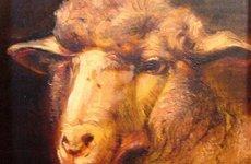 birkafej-6x6-olaj-fatabla-sheephead-oil-on-wood.jpg