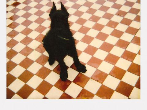 Fotó: Vedres Ági: Alex kockakövön, 16,5×18,5 cm, Eredeti polaroid, 1991
