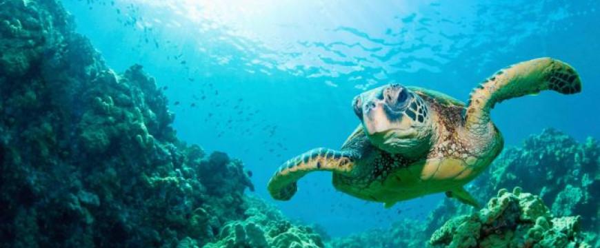 Fenntartható világ – június 8 – az óceánok világnapja
