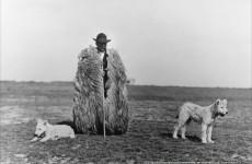 Fotó: Balogh Rudolf: Juhász kutyáival, c. 1930 © Magyar Fotográfiai Múzeum