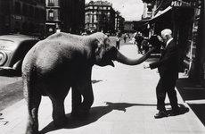 Fotó: Berkó Ferenc: Elefánt és kalap, Zürich, 1937 © The International Center of Photography
